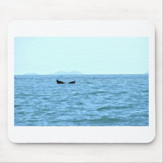 HUMPBACK WHALE MACKAY TAIL QUEENSLAND AUSTRALIA MOUSE PAD