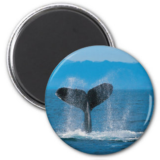 Humpback Whale 2 Inch Round Magnet