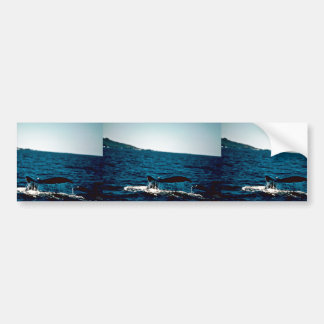 Humpback Whale Mexico Bumper Stickers