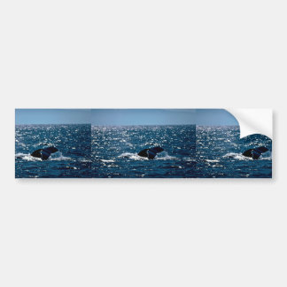 Humpback Whale Mexico Bumper Sticker