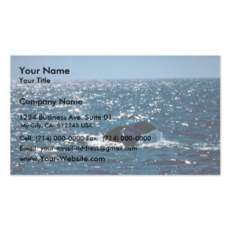 Humpback Whale Mexico Double-Sided Standard Business Cards (Pack Of 100)