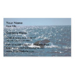 Humpback Whale Mexico Business Cards