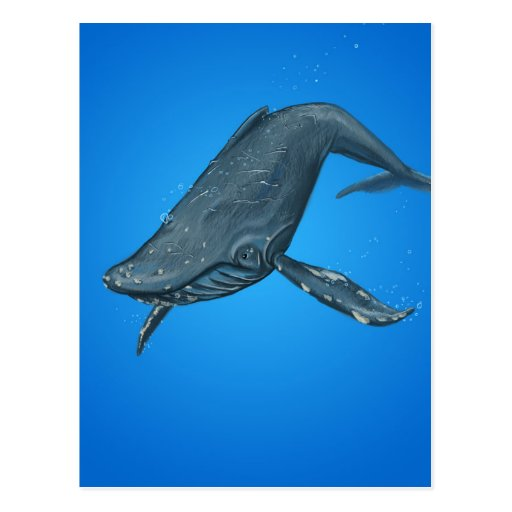 Humpback Whale Painting Postcard