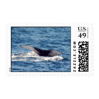 Humpback Whale Stamps