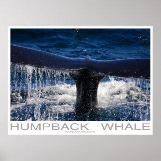 Humpback Whale Poster Print