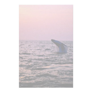 Humpback whale putting on a display at sunset, Cap Custom Stationery