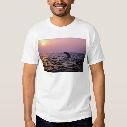 Humpback whale putting on a display at sunset, Cap T-Shirt