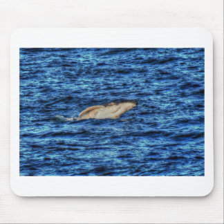 HUMPBACK WHALE QUEENSLAND AUSTRALIA ART EFFECTS MOUSE PAD