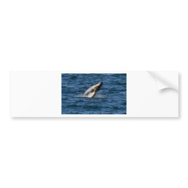Beach Themed HUMPBACK WHALE QUEENSLAND AUSTRALIA BUMPER STICKER