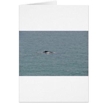 Beach Themed HUMPBACK WHALE QUEENSLAND AUSTRALIA CARD