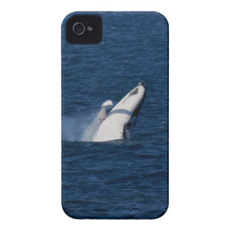 HUMPBACK WHALE QUEENSLAND AUSTRALIA iPhone 4 COVER