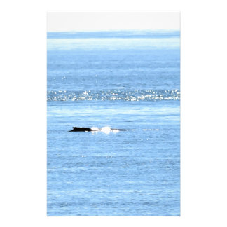 HUMPBACK WHALE QUEENSLAND AUSTRALIA STATIONERY