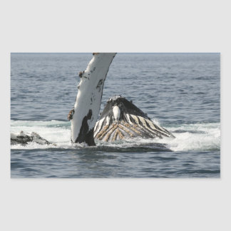 Humpback Whale Rectangular Sticker