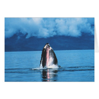 Humpback Whale Rising Greeting Card