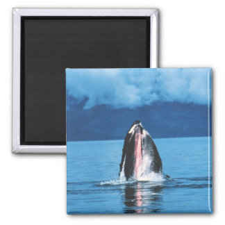 Humpback Whale Rising Refrigerator Magnets