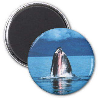 Humpback Whale Rising Refrigerator Magnet