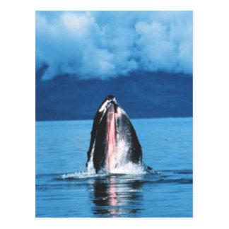 Humpback Whale Rising Postcard