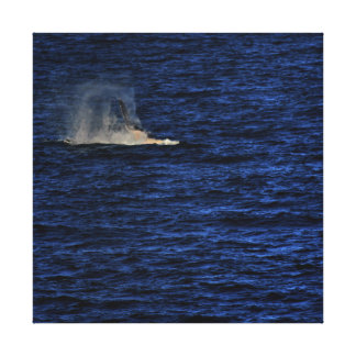 HUMPBACK WHALE SLAPPING WATER QUEENSLAND AUSTRALIA CANVAS PRINT