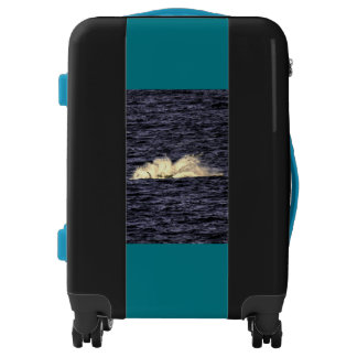 HUMPBACK WHALE SLAPPING WATER QUEENSLAND AUSTRALIA LUGGAGE