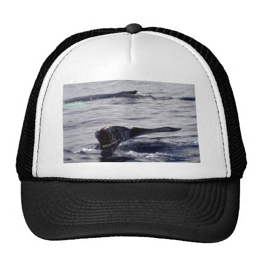Humpback Whale sounding Mesh Hats