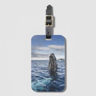 Humpback Whale Spyhops | Hope Bay, Antarctica Bag Tag