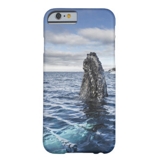 Humpback Whale Spyhops | Hope Bay, Antarctica Barely There iPhone 6 Case