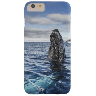 Humpback Whale Spyhops | Hope Bay, Antarctica Barely There iPhone 6 Plus Case