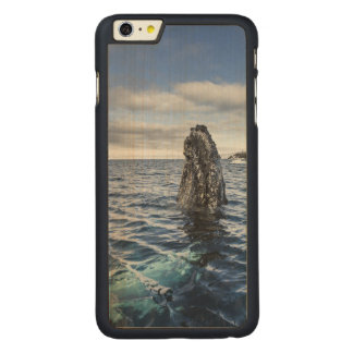 Humpback Whale Spyhops | Hope Bay, Antarctica Carved® Maple iPhone 6 Plus Slim Case