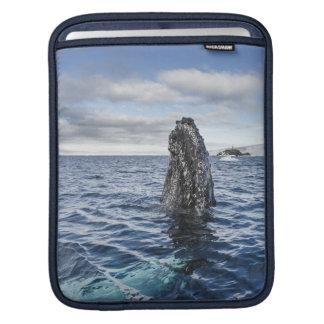 Humpback Whale Spyhops | Hope Bay, Antarctica iPad Sleeve