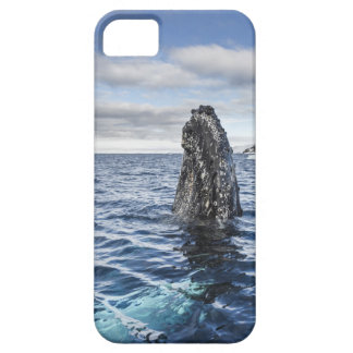 Humpback Whale Spyhops | Hope Bay, Antarctica iPhone SE/5/5s Case