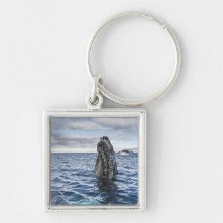 Humpback Whale Spyhops | Hope Bay, Antarctica Keychain