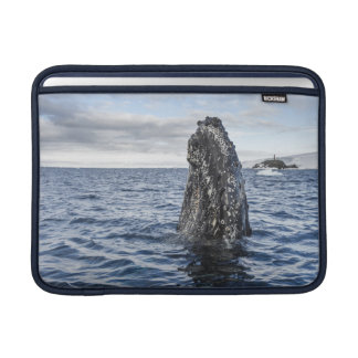 Humpback Whale Spyhops | Hope Bay, Antarctica MacBook Sleeve