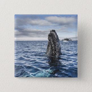 Humpback Whale Spyhops | Hope Bay, Antarctica Pinback Button