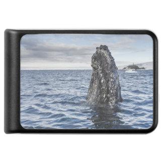 Humpback Whale Spyhops | Hope Bay, Antarctica Power Bank