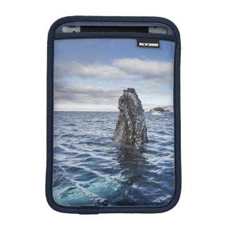 Humpback Whale Spyhops | Hope Bay, Antarctica Sleeve For iPad Mini