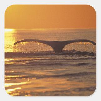 Humpback whale square sticker