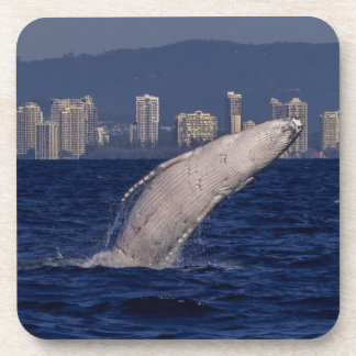 Humpback Whale Surfers Paradise Pacific Ocean Beverage Coaster