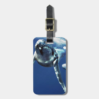 Humpback whale tag for luggage