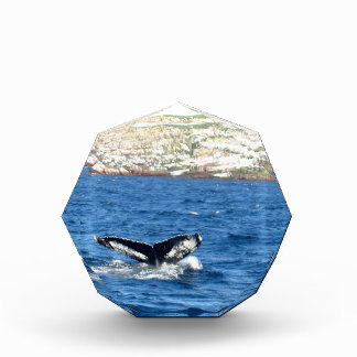 Humpback Whale Tail Acrylic Award