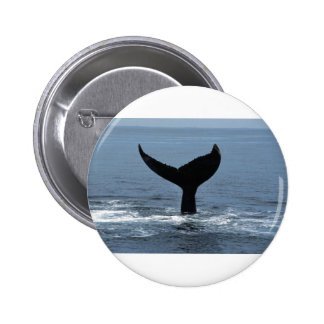 Humpback whale tail pins