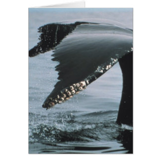 Humpback Whale Tail Greeting Card