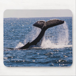 Humpback Whale Tail Fluke Off Surfers Paradise Mouse Pad