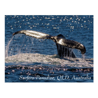 Humpback Whale Tail Fluke Pacific Ocean Postcard