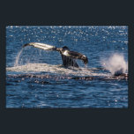 "Humpback Whale Tail Fluke Photo Print<br><div class=""desc"">A beautiful photo print featuring the tail fluke displayed by a humpback whale about to dive during its annual migration off the coast of Australia</div>"
