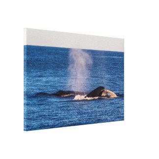 Humpback Whale Tail Fluke Surfers Paradise Canvas Print
