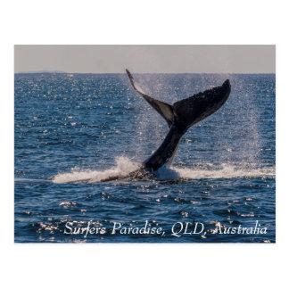 Humpback Whale Tail Fluke Surfers Paradise Postcard