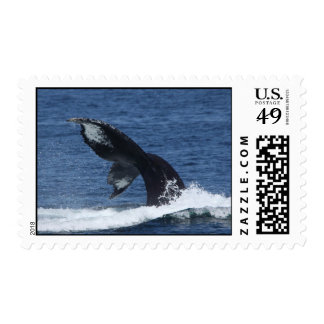 humpback whale tail flukes postage stamps