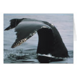 Humpback Whale Tail Greeting Cards