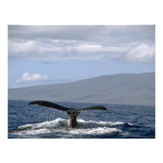 Humpback whale tail, Hawaii Flyer