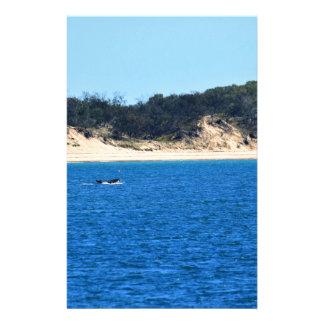 HUMPBACK WHALE TAIL MACKAY QUEENSLAND AUSTRALIA STATIONERY